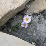 Karma-Gurung_0491